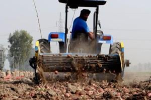 Way out of demand dip: Iran, Russia come to rescue of potato growers in Punjab