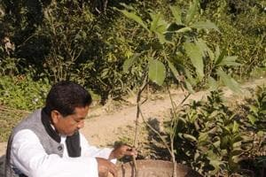 Each tree priced at Rs 2,000-Rs 3,000 can be ordered through a WhatsApp number.