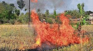 Agriculture officers, panchayat employees and farmers set fire to wheat that are almost ripe for harvesting in Sonpukur village in West Bengal, on March 4, 2017.