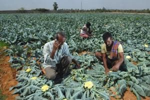 Uttarakhand organic farming policy: A law for and with the farmer