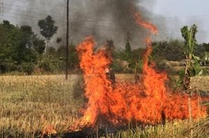 Mind the gap: burn and destroy mission in Bengal fields leaves a few questions