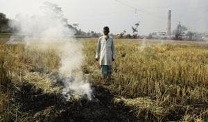 A farmer stands helplessly in the middle of his field staring at the crop that has been burnt by the government officers in Nadia district of West Bengal.