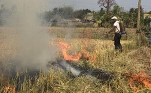 State government officers set fire to wheat in Sonpukur village on Chapra block in Nadia district of West Bengal.