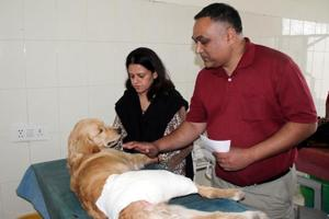 The golden retriever with its owners while being treated at GADVASU in Ludhiana on Tuesday.