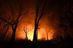 K'taka loses 715 sq km of green cover to fires, Bandipore National Park affected
