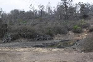 How a colonial legacy plant, lantana camara, is destroying Karnataka's forests