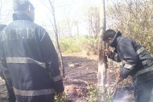 In Mumbai: 500m of Charkop mangroves charred, second incident this year