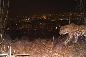 This image was captured by camera trapping. The area is frequented by humans during the day.