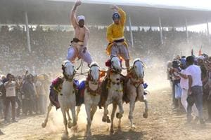 Punjab's Hola Mohalla: Traditional Sikh Nihang soldiers display...