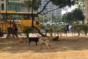 Gurgaon: Valley View Estate residents approach MCG against dog menace