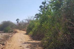 Mangroves in Manori-Gorai being destroyed, say activists from Mumbai