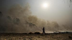 Delhi air pollution: NGT demands action plan to curb crop stubble burning