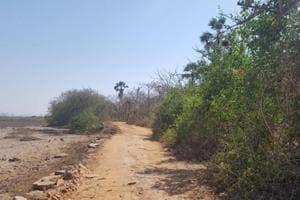 Another tenacious reprieve from development for Gorai-Manori