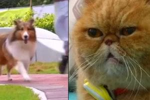 Wearable technology for dogs and cats is becoming increasingly popular...