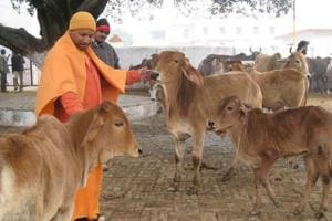 From pet dog to cows and temple robe, UP CM Yogi Adityanath brings...
