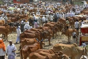 Crackdown on cattle smuggling: 43 arrested in UP, 27 FIRs filed