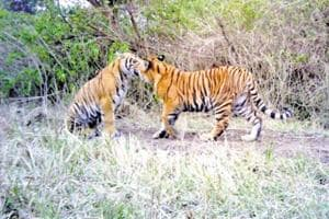 Will lions in UP zoos have to live on 'palak paneer'?: Congress MP