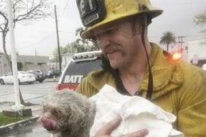 Firefighter revives lifeless dog pulled from house fire in California
