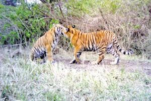 No meat for animals at Kanpur zoo after shutdown of city's...