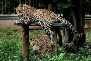 CZA puts all zoos on alert; preventive measures to be taken against...