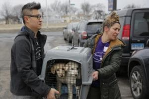 46 dogs saved from slaughter, reach New York from South Korea