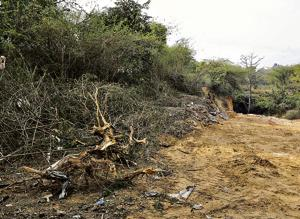 Gurgaon: Realtor, forest staff  booked felling trees in Sector 111