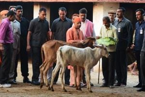 UP's development, cow protection government's top priorities: Yogi