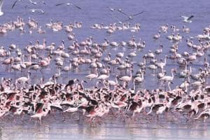 For a safe flight: India to get flyway maps for migratory birds