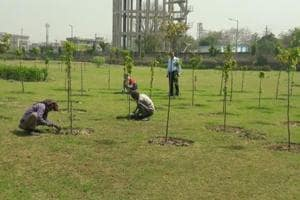 Noida, Greater Noida authorities to replace dead saplings with new...