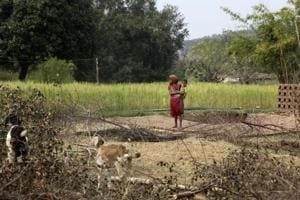 In Madhya Pradesh, a campaign to save tribals from bankruptcy over...