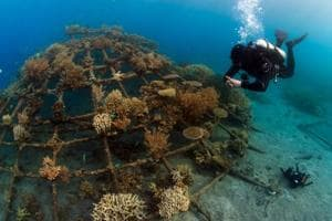 Scientists to use solar energy to regenerate locally extinct corals
