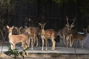 Delhi Zoo gears up for summer with sugar-free kheer, coolers for inmates