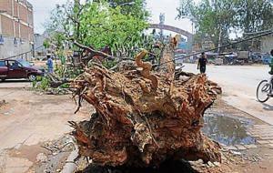 Tree Act
