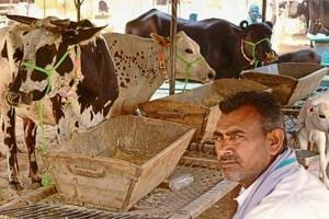 Alwar lynching: Resentment in cattle market where Pehlu Khan made last purchase