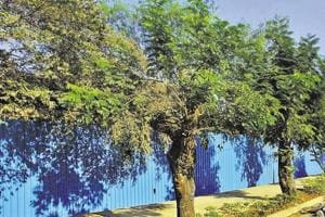 The data showed there were 35.98 lakh trees in the city, against 19.17 lakh in 2008, when the last tree census was carried out. But the ratio of trees to population — or the number of trees per citizen — remained at a low 0.28.
