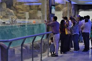 Visitors in the Byculla Zoo looking at Humboldt penguins kept in a 1500 square foot enclosure.