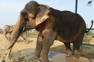 After 57 years in captivity, 60-yr-old elephant succumbs to multiple...