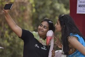 Pink beauties shine at Mumbai's Flamingo Festival