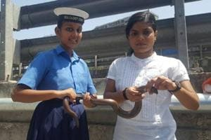 In pic: 3-foot-long snake rescued in Mumbai, which side's the head,...