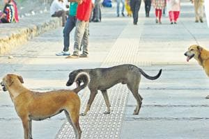Fangs of fear: Upswing in number of dog-bite cases in Chandigarh,...