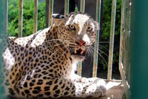 Maharashtra lost 375 big cats since 2010, in India's top four in tiger...