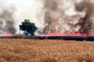 Fields on fire: As farmers count losses, PSPCL says wheat over only...