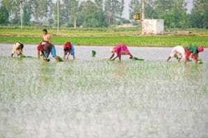Jaitley rules out tax on farm income as proposed by Niti Aayog