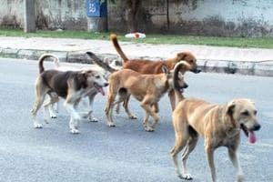 Canine horror: Chandigarh dog-bite victims allege admn's failure to...