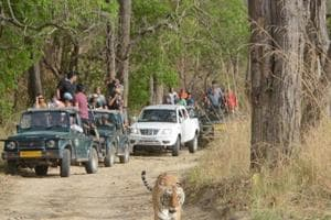 Kandi road project: Corbett to be fenced to block tigers' escape to...