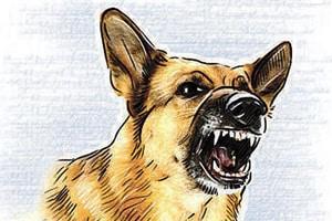 Stray dog bites 6 in Chandigarh's Mauli Jagran, dies; rabies suspected...