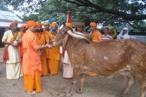 Uttar Pradesh chief minister Yogi Adityanath feeding cows at Gorakhpur.  One of the private member's bills that Yogi Adityanath had introduced in Parliament includes  one seeking a nationwide ban on the slaughter of the 'cow and its entire progeny'.