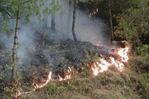 The forest fires also contributed to one-sixth of the carbon emissions in India.