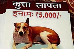 Brownie's owner Anupama Srivastava printed over 2,000 posters announcing a reward of Rs5,000 to anyone who could provide information regarding her pet's whereabouts.