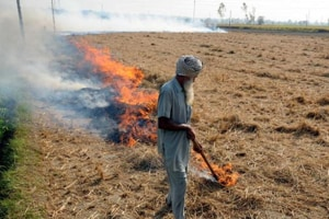 Despite administration's ban on burning of stubble, farmers continue to openly defy the order.